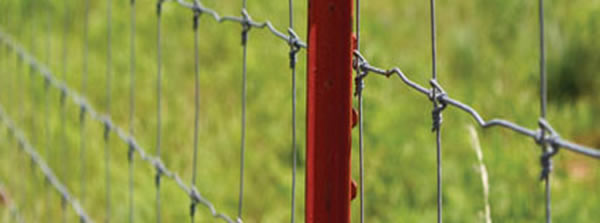 Painted Iron Posts for Galvanized Fencing Wire Fastening