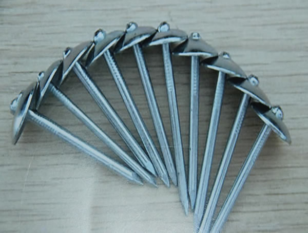 Fence Post Used Common Nails With Umbrella Head